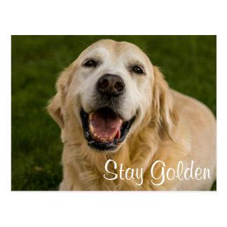 """""""Stay Golden"""" Golden Retriever Postcard"""