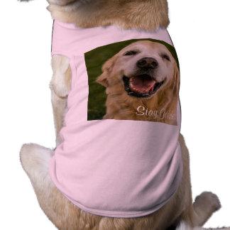"""""""Stay Golden"""" Golden Retriever Ribbed Tank Top Pet T Shirt"""