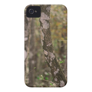 Steadfast Legend iPhone 4 Cases