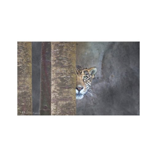 """Stealthy Jaguar, """"wild for Life"""" Canvas edition Gallery Wrapped Canvas"""