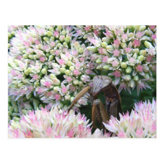 Stealthy Mantis ~ postcard