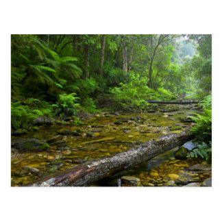 Steam In Forest, The Knysna-Amatole Montane Postcard