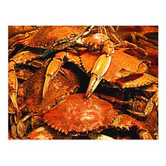 Steamed Maryland Hard Crabs Postcard