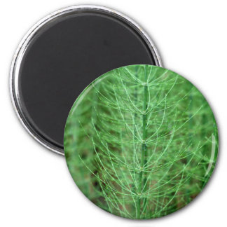 Steams of water horsetail (Equisetum fluviatile) 2 Inch Round Magnet