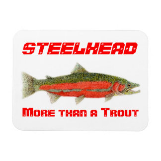 Steelhead- More than a Trout Magnet