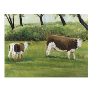 Steer and Calf Art Postcard