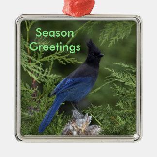 Stellar Jay Christmas Ornament