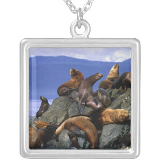 Stellar sea lions Alaska; USA Silver Plated Necklace