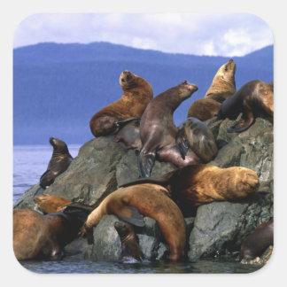 Stellar sea lions Alaska; USA Square Sticker