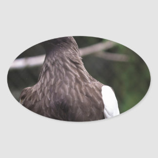 Steller's Sea Eagle Oval Sticker