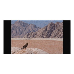 Steppe Eagle, Aquila nipalensis, Steppenadler Card