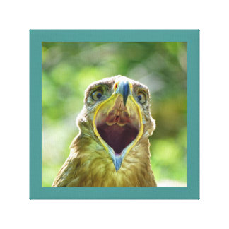 Steppe Eagle Head 001 07.11, screaming Canvas Print