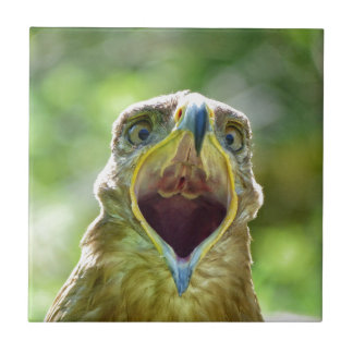 Steppe Eagle Head 001 2.1 Tile