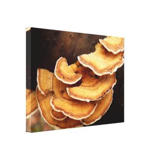 Stereum Hirsutum Fungi Canvas Print