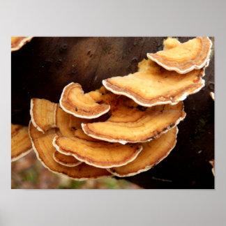 Stereum Hirsutum Fungi Poster