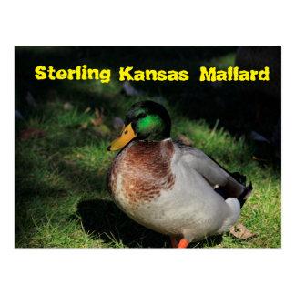 Sterling Kansas Mallard Post Card