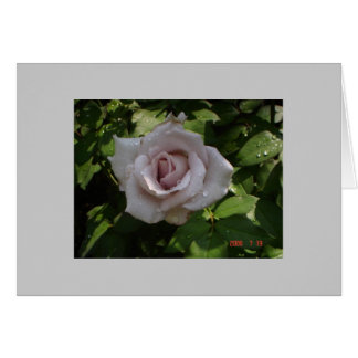 sterling silver rose card