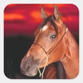 Sticker square horse