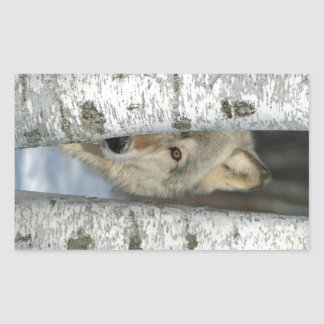 sticker with photo of gray wolf among birch trees