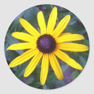 Stickers - Black-Eyed Susan