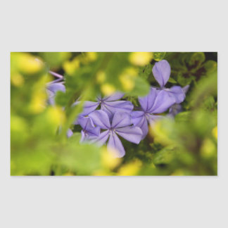 Stickers - Blue Cape Plumbago
