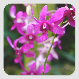 Stickers - Cooktown Orchid