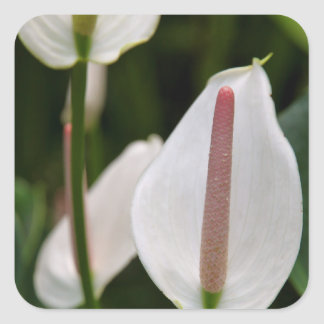 Stickers - Flamingo Flower