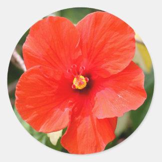 Stickers - Hibiscus