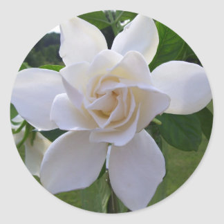 Stickers - Naturally Gorgeous Gardenia