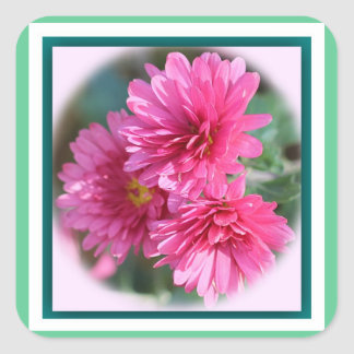 Stickers with Asters