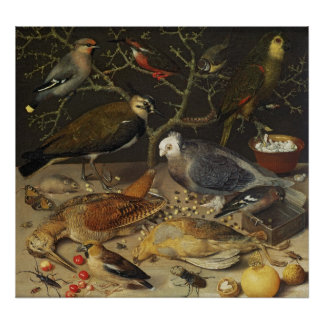 Still Life of Birds and Insects, 1637 Poster