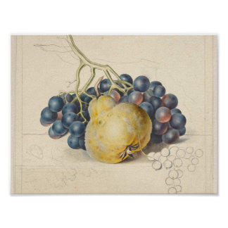 Still life with grapes and a pear, Georgius Jacobu Poster