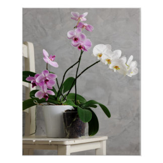 Still life with orchids poster