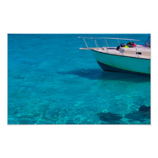 Sting Rays in Caymans Poster