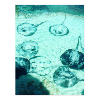 Sting rays in Xcaret - Mexico Postcard