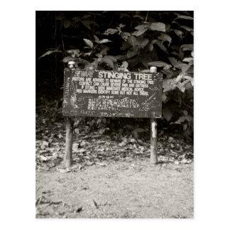 Stinging tree warning sign postcard
