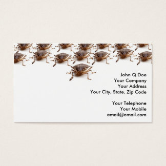 Stink or Shield bug for pest exterminator Business Card