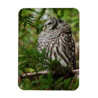 Stoic Barred Owl Rectangular Photo Magnet