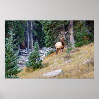 Stoic Elk Poster