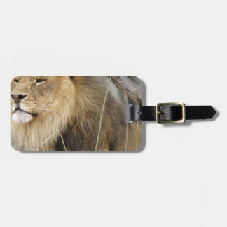 Stoic Lion Looking Off into the Distance Luggage Tag