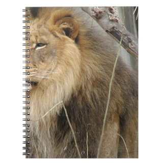 Stoic Lion Looking Off into the Distance Note Books
