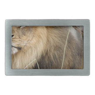 Stoic Lion Looking Off into the Distance Rectangular Belt Buckles