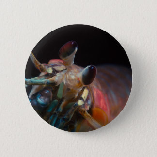 Stomatopod (Mantis Shrimp) 2 Inch Round Button