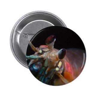 Stomatopod (Mantis Shrimp) 2 Inch Round Button