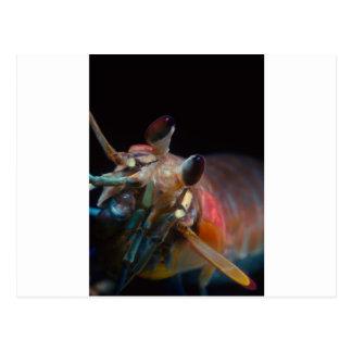Stomatopod (Mantis Shrimp) Postcard