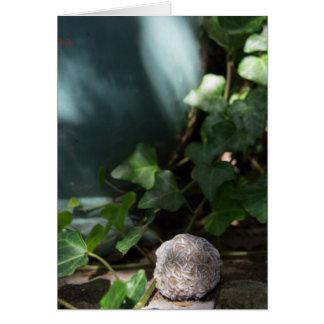Stones | Desert Rose 145 Card