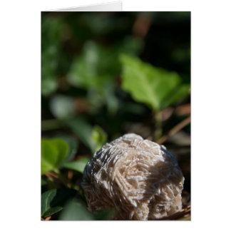 Stones | Desert Rose 146 Card