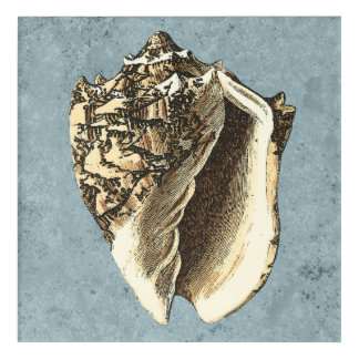 Stonewashed Conch Shell Acrylic Wall Art