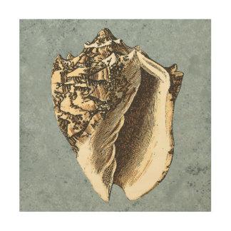Stonewashed Conch Shell Wood Wall Decor