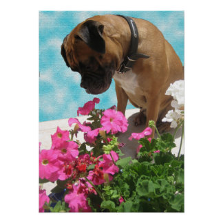 Stop and Smell the Flowers Poster
